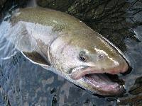 魚野川 フライ・ルアーフィッシング 渓流釣り・本流釣りの宿
