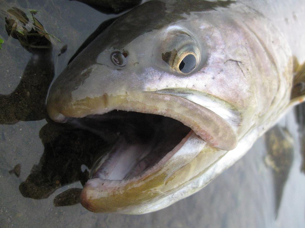 魚野川フライ・ルアーフィッシング/渓流釣り・本流釣りに有名釣り宿
